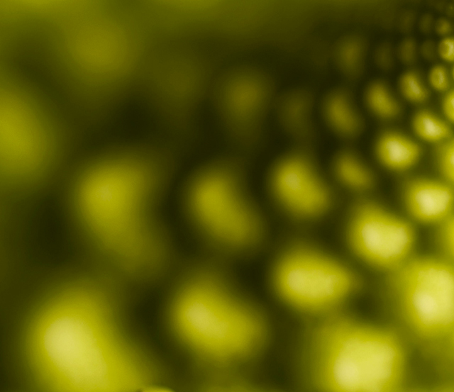 Antonello Colonna: Gnocchi Broccoli e Arzilla