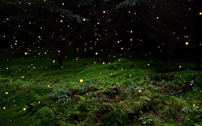 E se il cielo si riempie di lucciole.