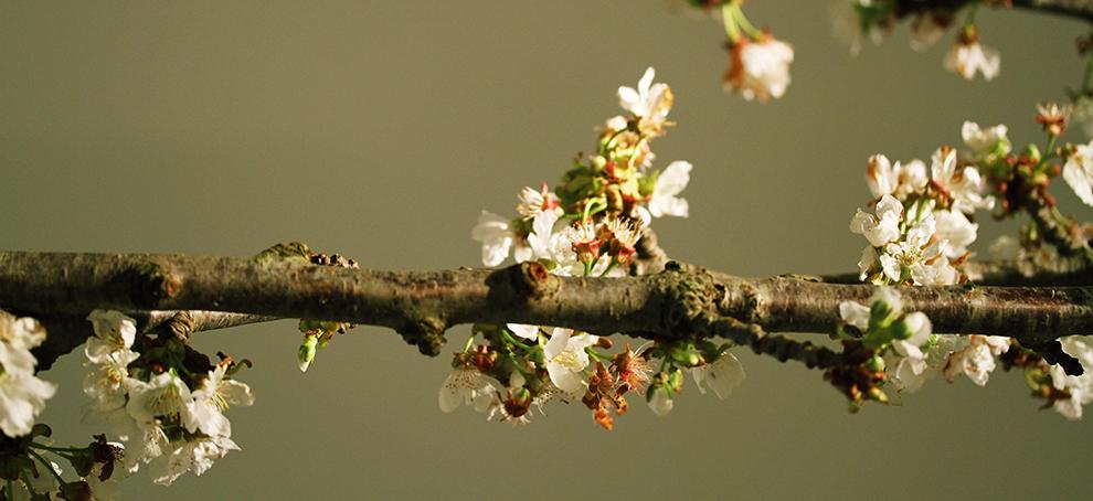 Biancoluna | La primavera ti esplode dentro.